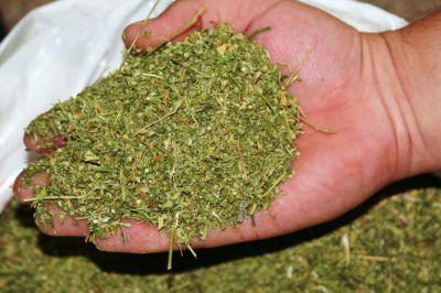 ВТольятти схвачен мужчина схорошим запасом марихуаны